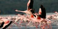 Los flamencos son la principal seña de identidad de Lago Nakuru