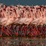 Dicen que los flamencos en Lago Nakuru se cuentan por millones ... nosotros no los hemos contado