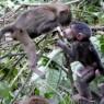 La población de primates es también significativa, destacando babuinos y colobos