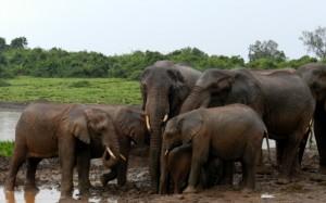 Los elefantes son los animales que más divisaremos en el Parque Nacional de Aberadres