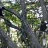 Existe una abundante población de colobos en Lago Naivasha