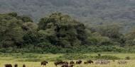 Lapoca presencia de depredadores es sinónimo de paz para los herbívoros en el Parque Nacional de Arusha
