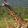 Pero por norma general los animales conviven en armonía en el Parque Nacional de Arusha