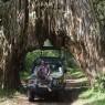 The Arched Fig Tree, un túnel de lo más curioso en el Parque Nacional de Arusha