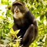 Mono Azul. La población de primates es uno de los atractivos del Parque Nacional de Arusha