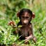 Los babuinos también están presentes en el P.N. de Arusha
