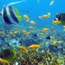La Isla de Mafia es uno de los mejores lugares del planeta para el buceo