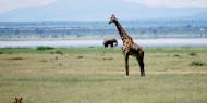 Diversidad de fauna y grandes paisajes son la enseña del Parque Nacional del Lago Manyara, Tanzania