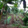 Además de café se cultivan frutas y verduras de gran calidad que se posteriormente se sirven en el restaurante