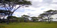 Ndutu Safari Lodge: ubicación, entorno, servicio y sencillez