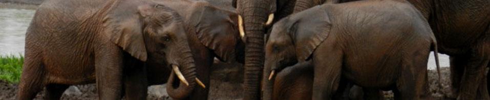 Manada de elefantes en Tanzania - ExploraSafaris.com