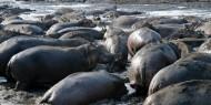 El Parque Nacional de Katavi presenta las mayores concentraciones de cocodrilos e hipopótamos de Tanzania