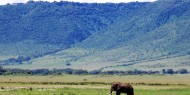 Impresionante elefante en el Cráter de Ngorongoro, Tanzania