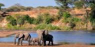 El Parque Nacional de Ruaha presenta una concentración impresionante de elefantes
