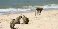 El Parque Nacional de Saadani combina playas, con paisajes de selva y sabana y una fauna espectacular