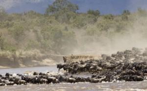Parque Nacional de Serengeti