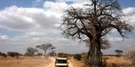 Legendario Baobabs salpican el Parque Nacional de Tarangire, Tanzania