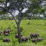 Elefantes en el temporada húmeda en el Parque Nacional de Tarangire, Tanzania