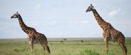 Tanzania y Kenia más cerca