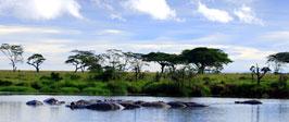 ¿Sueñas con África?