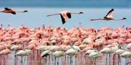 Flamencos en el Parque Nacional de Nakuru