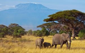 Los dos mayores atractivos del Parque Nacional de Amboseli: los elefantes y las vistas del Kilimajaro