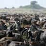 Entre los meses de agosto a noviembre podremos deleitarnos con La Gran Migración en Masai Mara
