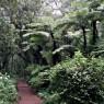 La zona baja del Kilimajaro está cubierta por bosques tropicales