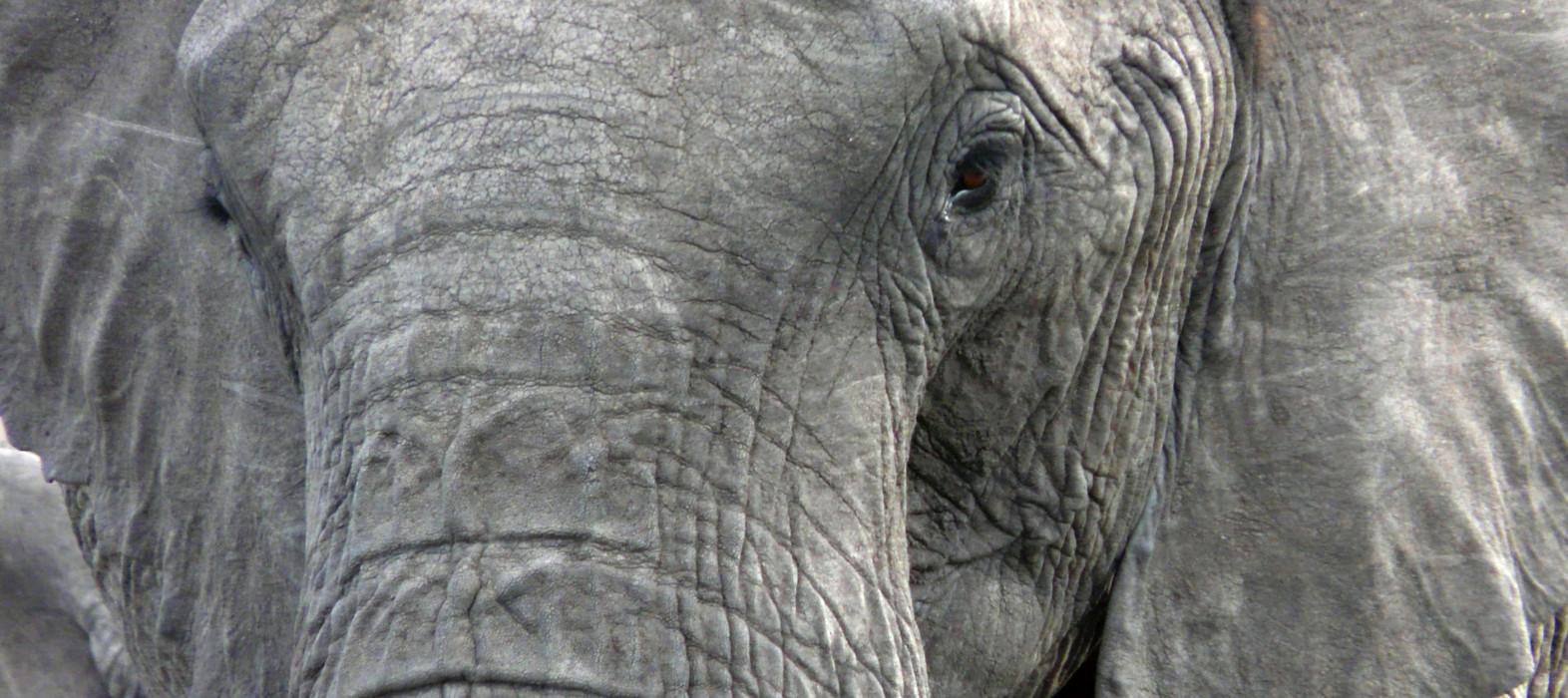 Elefantes en el Tarangire