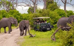 Los elefantes merodean a sus anchas en el Parque Nacional de Chobe