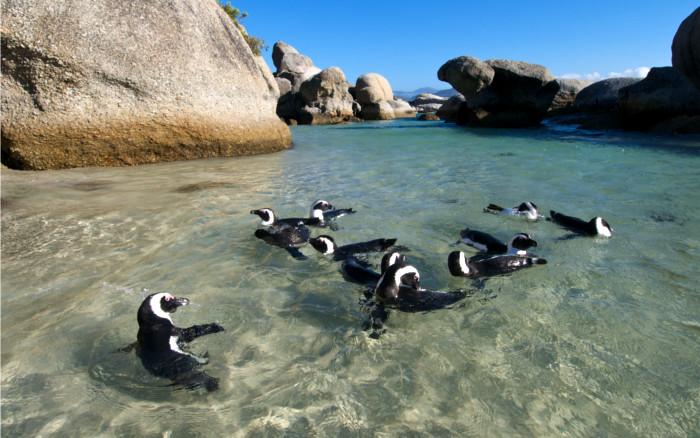 Boulders Beach (Área del Cabo)