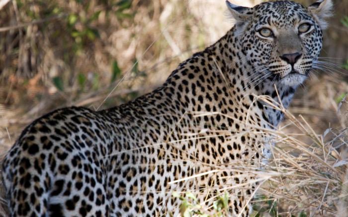 Reserva privada de Kapama (Área del Kruger)