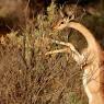 La Reserva Nacional de Samburu nos ofrece un contrapunto en paisajes y fauna a los parques del sur