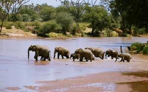 El río Ewaso Nyro, agua marrón, sirve de frontera entre Samburu y Buffalo Springs