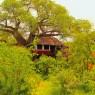 Las habitaciones del Tarangire Treetops se encuentran en legendarios baobabs elevadas del suelo por pilotes