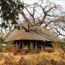 La estancia principal del Treetops está presidida por un enorme baobab de más de 700 años