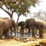 Al bebedero artificial del Tarangire Treetops se acercan a beber numerosos animales