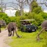 Los elefantes son los grandes protagonistas de Chobe