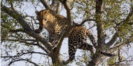 shutterstock_77267194 Leopard - Kruger National Park, South Africa